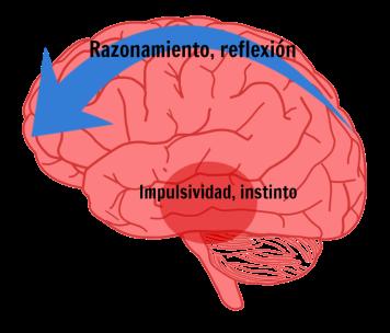 cerebro reflexivo